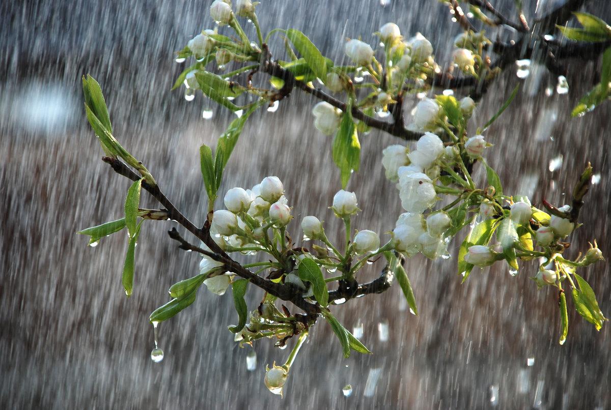 фото весна в апреле когда все цветет как