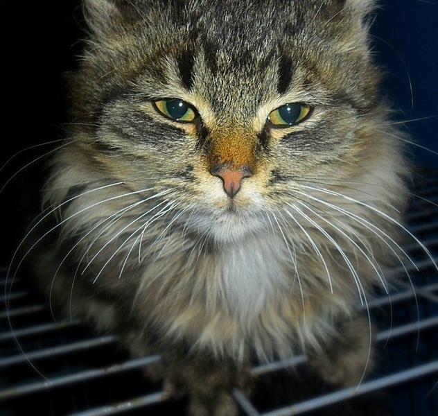 Загляните в Витебский приют для бездомных животных и выберите себе пушистого друга, фото-14