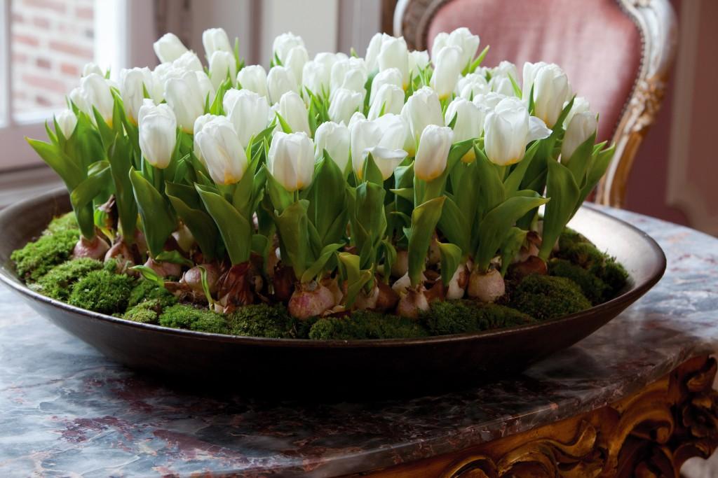Сажать тюльпаны в доме 127