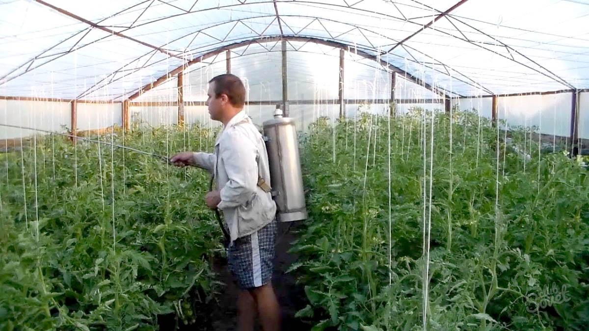 Как сделать теплицу для помидор и огурцов