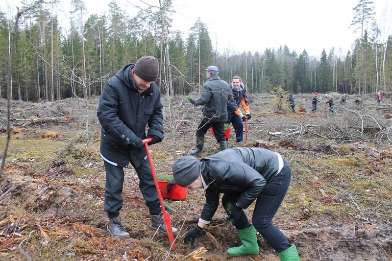 Машины для посадки лесных культур
