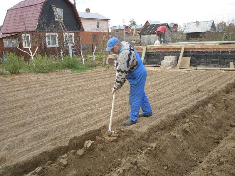 Что сажать осенью на даче для обогащения почвы 40